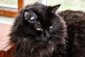 Chat noir et la sorcellerie  Images?q=tbn:ANd9GcRL0W8Sl0y7M_hQXDXJGhHHMUch23haLXdXYrU6mKZy_6v6Vzu5iw