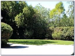 lakeland yard and garden lakeland yard garden center flowood ms