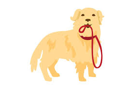 Tucker | the golden retriever. Golden Retriever With Leash In Mouth Svg Cut File By Creative Fabrica Crafts Creative Fabrica