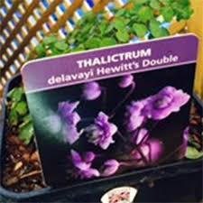 hewitts garden center picture of double hewitts garden center franklin tn