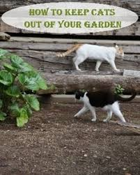 cat repellent for garden. Cat Repellent Or How To Keep Cats Out Of Your Garden For