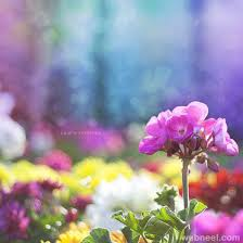 cool colorful nature photography. Wonderful Nature In Cool Colorful Nature Photography