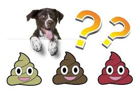 Types Of Dog Poop And What They Mean Dog Poop Chart