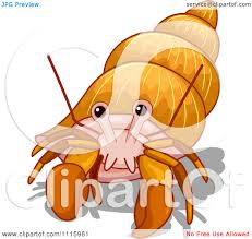 Small Picture Hermit Crab Clipart Download Free