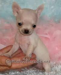 fancy paws puppies boutique