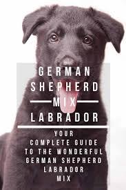 white german shepherd black lab mix. Do You Own German Shepherd Lab Mix On White Black The Labrador Site