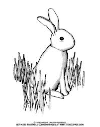 Small Picture Bunny in the Grass Free Coloring Pages for Kids Printable