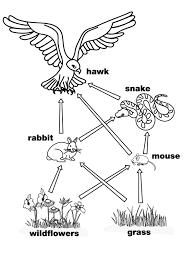 foodweb food chain pyramid worksheet termolak on food web worksheet pdf
