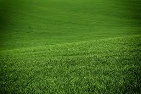 Green grass field background Nature Photos Creative Market