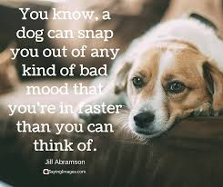 Dog Quotes Inspirational Cool Dog Love Quotes Pleasing 48 Inspirational Dog Quotes About Life And