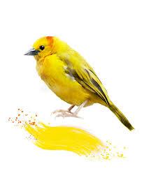 watercolor image of yellow bird stock ilration image 45769717