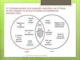 Comparing Animal And Plant Cells Venn Diagram Plant Cells And Animal Cells Venn Diagram