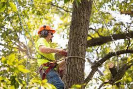 When Do You Need To Hire A Tree Service Provider? - Org This!
