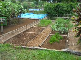 Small Picture Elements of Garden Plot Design Mauis Upcountry Organic