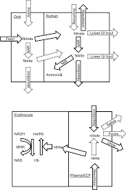 massey ferguson 1240 wiring diagram pdf massey massey ferguson 1240 wiring diagram pdf mey ferguson 1240 wiring diagram pdf mey