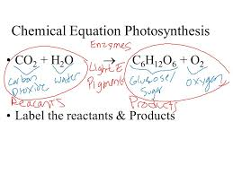 47 chemical equation photosynthesis co 2 h 2 o c 6 h 12 o 6 o 2 label the reactants s