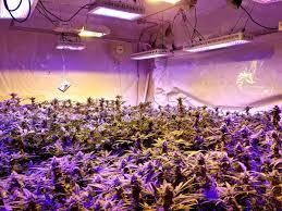 Do Grow Lights Work Led Grow Lights For Marijuana