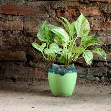 gorgeous indoor plants that love the dark