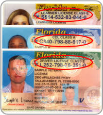 And Information License Card Id Florida Driver's