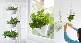 Indoor Garden Design Ideas Impressive Indoor Garden Idea Hang Your Plants From The Ceiling Walls