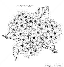 花 あじさい イラスト 白黒のイラスト素材 Pixta