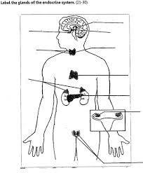 Of endocrine system endocrine system diagram unlabeled endocrine rh just add water biz endocrine system gland