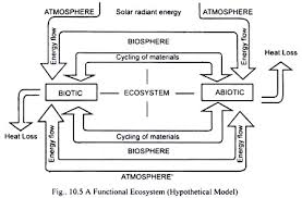 Components Of Ecosystem Flow Chart Components Of Ecosystem Biotic Components And Abiotic
