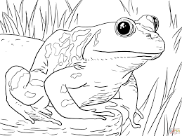 Small Picture Frogs Coloring Pages Best Of Coloring Pages glumme