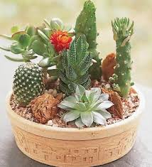 Small Picture Cactus Garden Marshall Florist