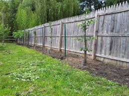 How To Plant Bare Root Fruit Trees  Peak ProsperityWhen Do You Plant Fruit Trees