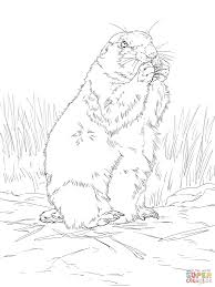 Small Picture Black Tailed Prairie Dog coloring page Free Printable Coloring Pages