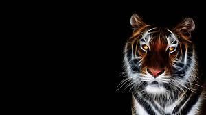 3D Tiger Wallpaper Desktop