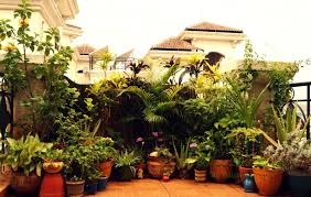 Small Picture Plants For Balcony Gardens Plus Indian House Garden Designs