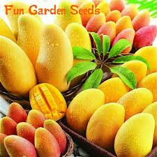 <b>2016 Hot Sale</b> 1 Pcs A Bag Mango Mini Seeds Rare Giant Mango ...