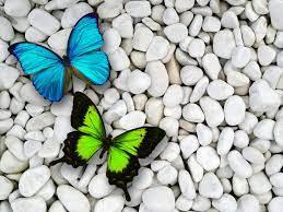 Blue Butterfly Wallpaper ...
