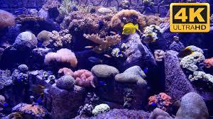 Beautiful Uhd Aquarium Screensaver And Tv Wallpaper Youtube