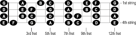 Notes On The Neck Of The Bass Cyberfretbass Com