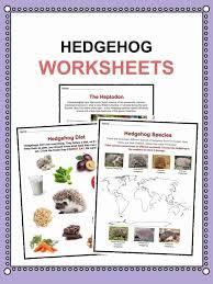 Hedgehog Facts & Worksheets | KidsKonnect