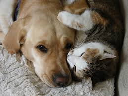 Image result for dogs and cats friends