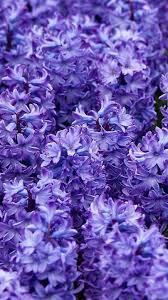Dark Purple Flower iPhone Wallpapers ...