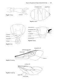 Bumble bee diagram solitary bees pelagic publishing