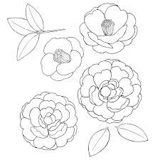椿の花素材線画の画像素材31252585 イラスト素材ならイメージナビ