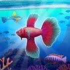 fish tycoon vollversion