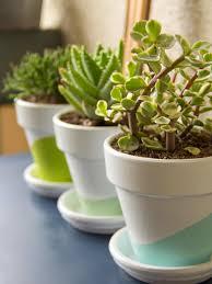 ... Growing Succulents Indoors Diy Growing Succulent Planter Ideas Diy Full  Size