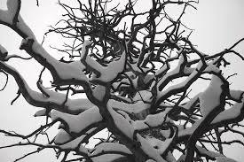 Snow Maze Photograph by Ivan Franklin