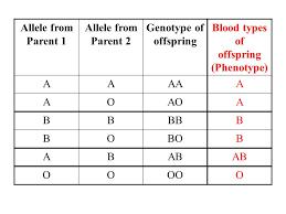 Blood Type Offspring Chart Factual Blood Types Chart For Offspring Child Blood Type