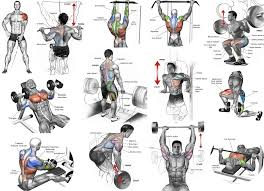top muscle building workouts for men all muscle building workout plan for beginners pdf