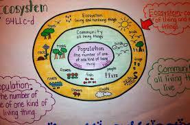 Ecosystem Anchor Chart Fourth Grade Science Third Grade