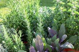 growing herbs at home making an herb garden in your yard