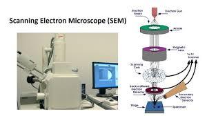 Scanning Electron Microscope Sem Bioscience Notes